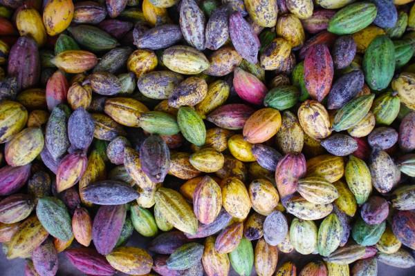 ベトナムのチョコレート